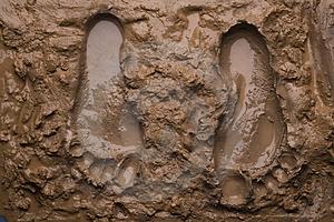 mud-foot-prints